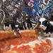 The Holsteins at Gino's East by andyi