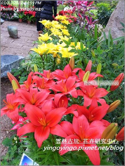 雲林古坑_花卉研究中心20120123_R0050652
