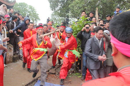 6794338033 b0f3a24eef Lễ hội Chạy lợn ở Hà Nội Nóng bừng 3 phút mổ lợn khao quân