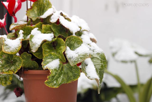 2 de febrero de 2012, nevando!