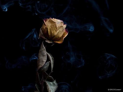 dead_flower_2