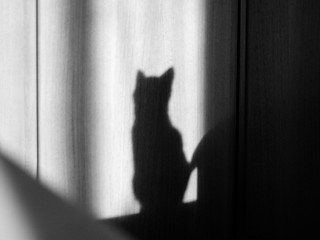 Black shadow of white cat