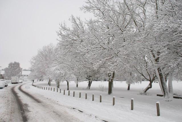snow in rye DSC_3257_1