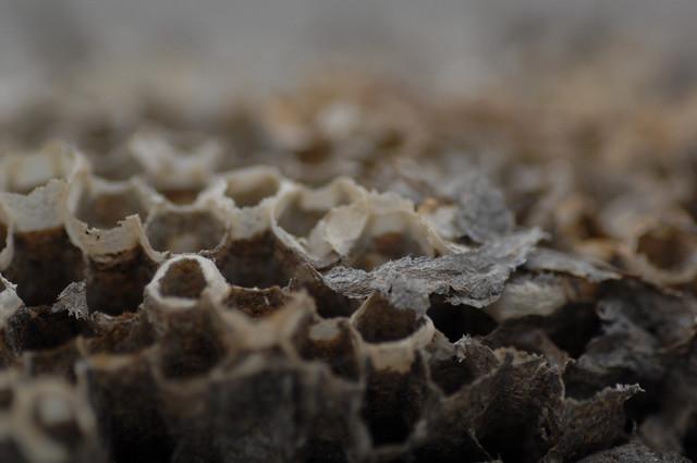 how to kill a hornets nest