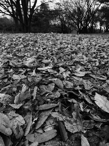 Carpet of dead leaves.
