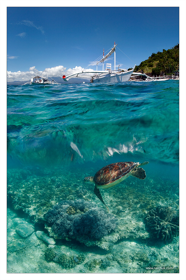 Dive to Philippines