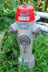 lawn(0.0), fire hydrant(1.0),