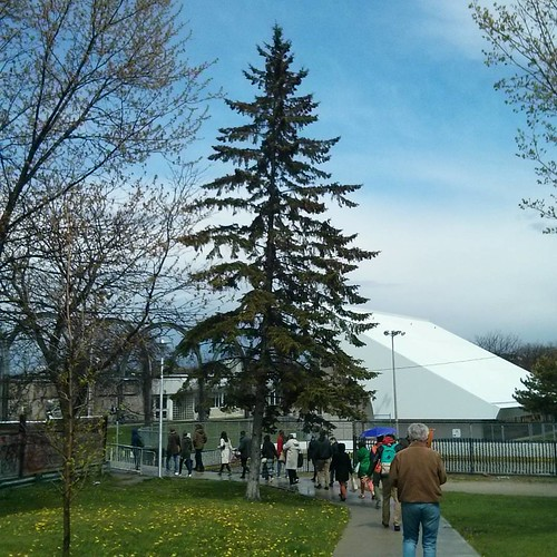 Pine tree #toronto #janeswalk #lovetowalk #galleriamall #wallaceemerson #pine #tree