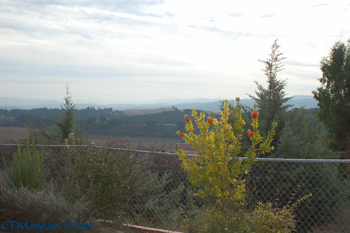 view grapevines
