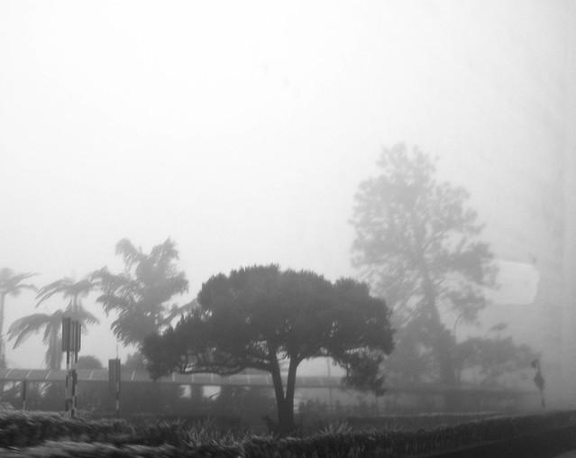 IMG_0855 Misty