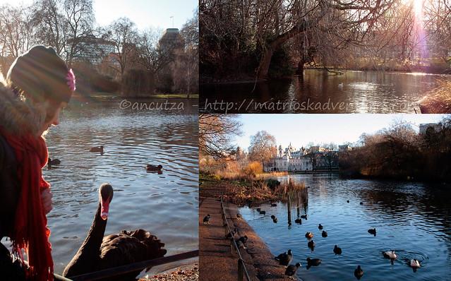 foto immagini isola delle anatre St James's Park Lnondra Londo