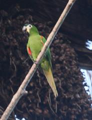Guyana-8585