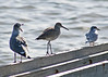 Day 339