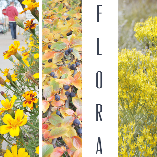 santafe_flora_1