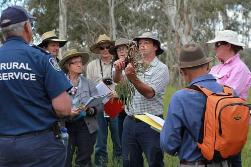 Dave Carr teaching plant identification at South Guyra TSR