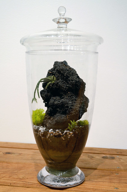 A terrarium created by Jennifer Williams, on exhibit at Brooklyn Botanic Garden. Photo by Elizabeth Peters.