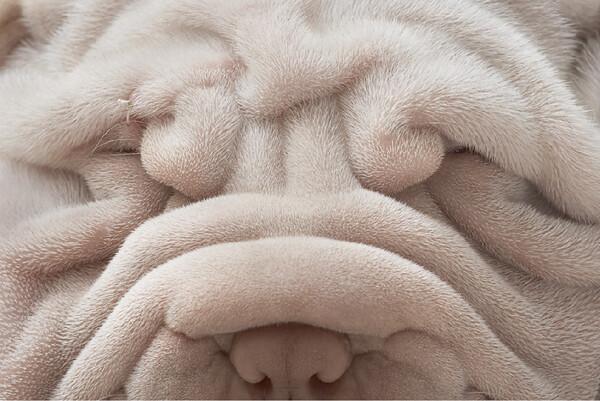 dogsgods9