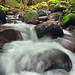 Up a Creek by Gary Randall