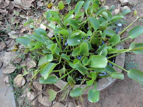 هل تعرف ما هذه النبتة؟