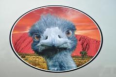 Emu Run logo