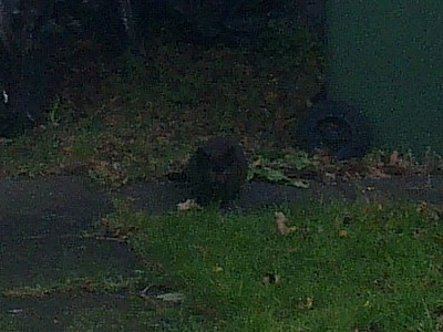 New feral kitten in the back garden
