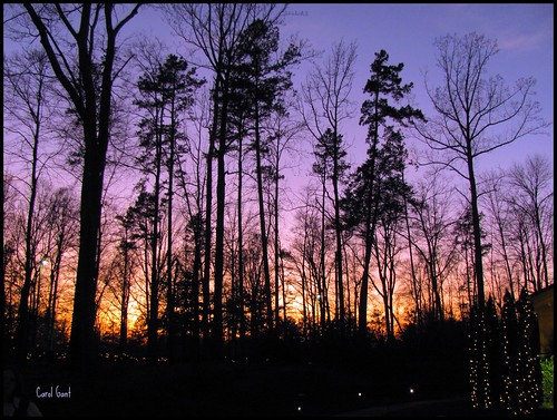 trees sunset sky silhouette 2011