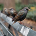Central Park Avians - Dedicated to my friend vtpeacenik by Professor Bop