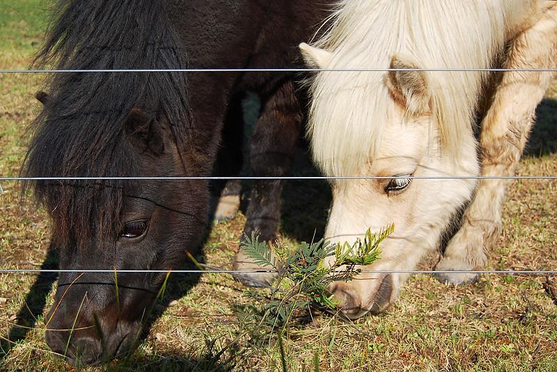 _ponies_