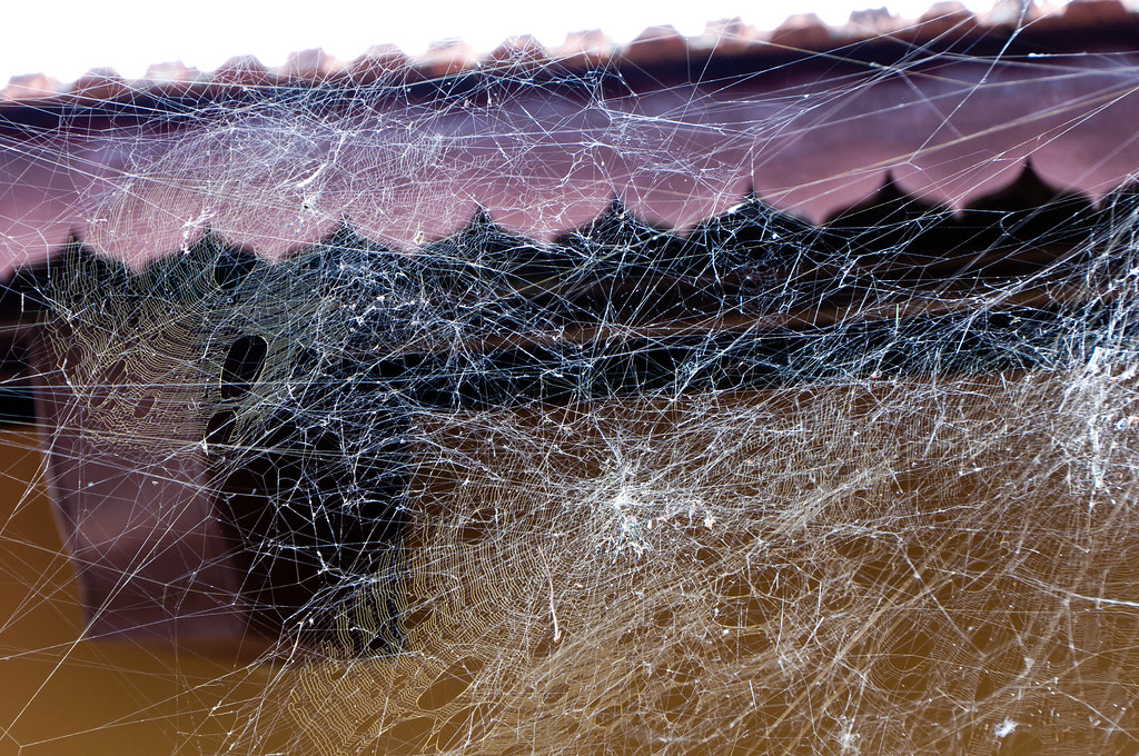 captured in a giant cobweb