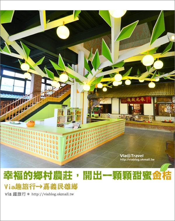 【嘉義新景點】民雄金桔農莊~到民雄找一顆夢幻的金桔樹!