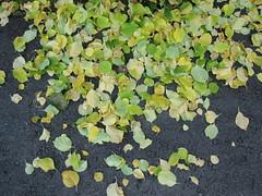 Herfst/Autumn/Herbst/l'Automne 2011