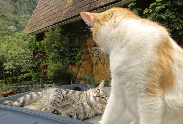 Tinoco e Pingo