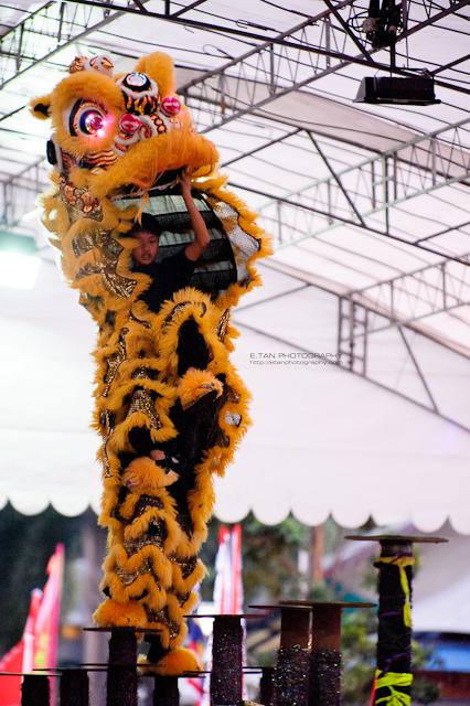 Lion Dance - 002