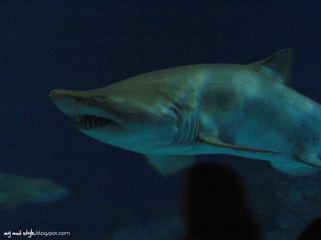Denver Aquarium 15