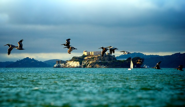 The Rock and pelican