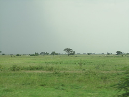 The drive along the Serengeti