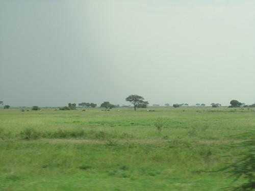 The drive along the Serengeti