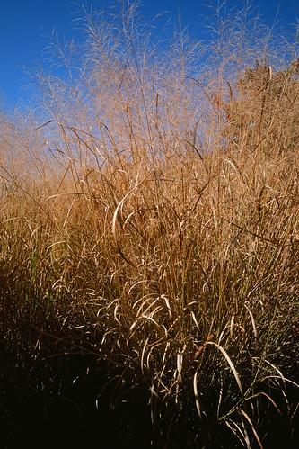 texture film zeiss shadows asheville northcarolina groveparkinn colorslide fujivelvia50 contaxg2 2011 28mmf28biogon