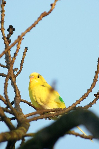 Budgie In A Tree, Copnor Rd, Portsmouth