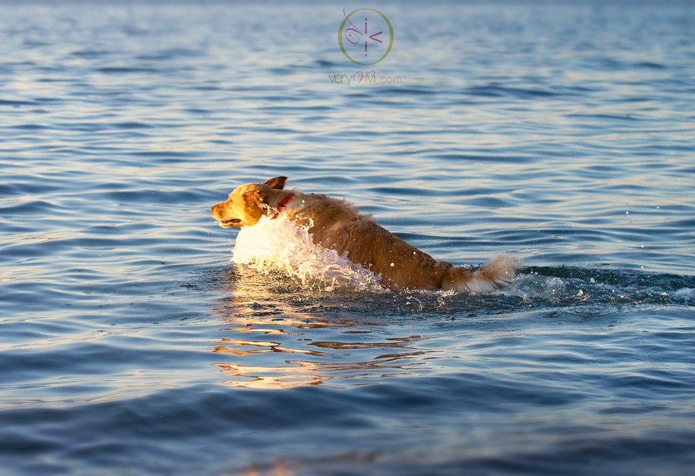 Leap! Splash! Fetch!