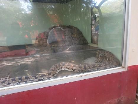 Guindy-Chennai-Snake-park-01