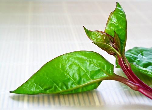 IMG_1254 潺菜,malabar spinach