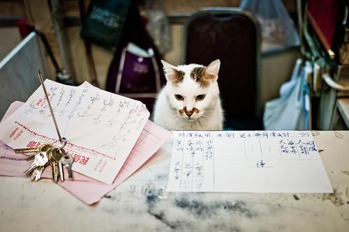 無料写真素材, 動物 , 猫・ネコ, ビジネスシーン