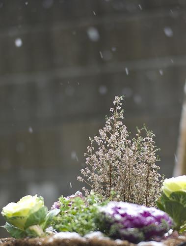 SNOW @Tokyo 2012