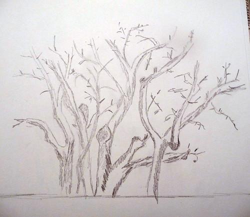 Laloco - arbre