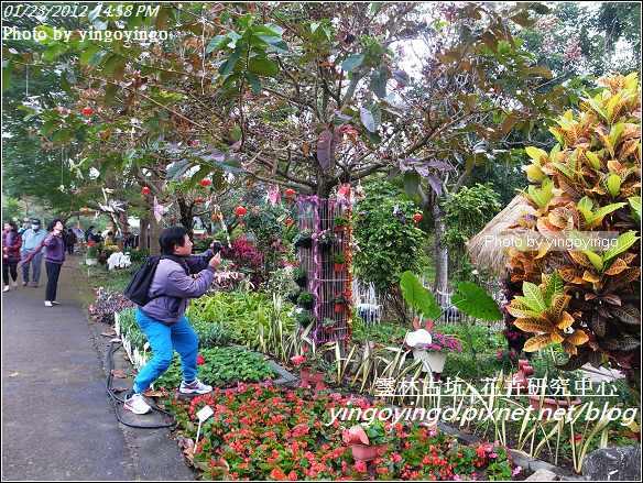雲林古坑_花卉研究中心20120123_R0050649