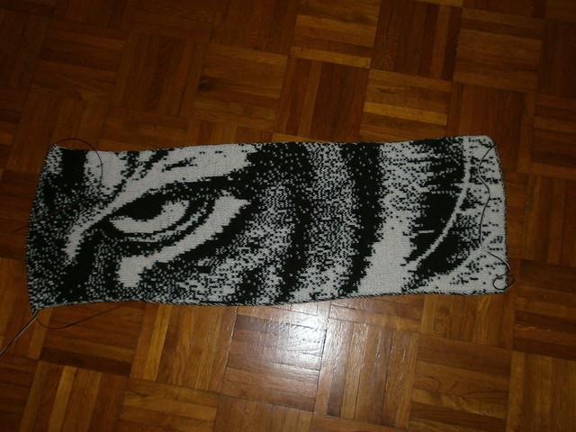 12-01-24 Tiger