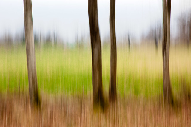 Forest Impressions II