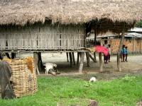 Bamboo House, Assam