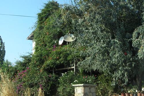 Burhaniye day 2 (Ayvalik): hidden behind plants